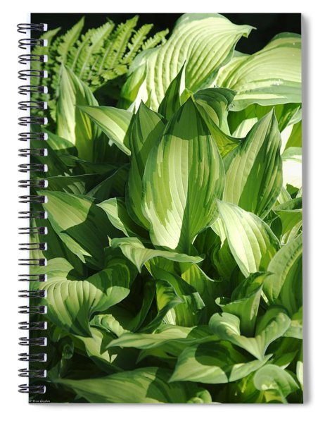 Spiral Notebook featuring the photograph Hosta 5416 by Brian Gryphon