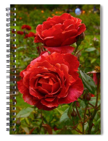 Hot Cocoa Floribunda In The Garden Spiral Notebook