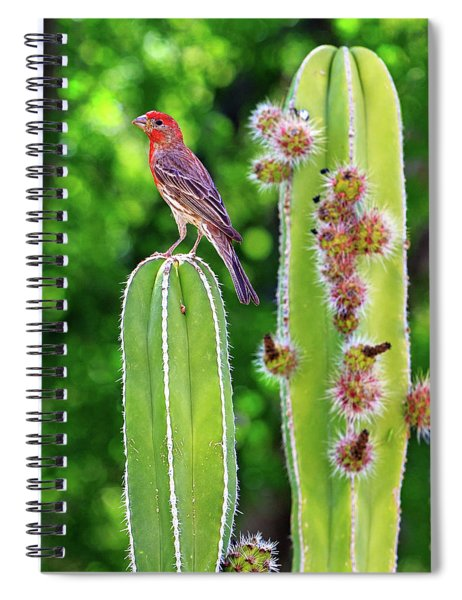 House Finch On Blooming Cactus Spiral Notebook