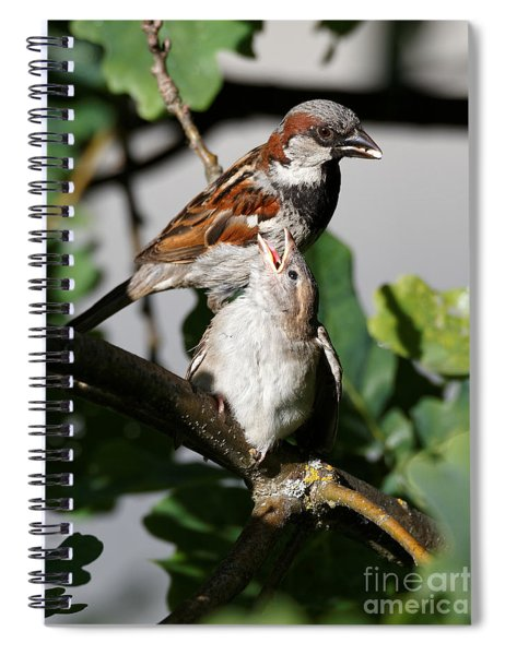 House Sparrow - Feed Me Daddy Spiral Notebook