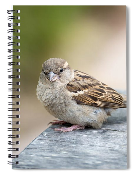 House Sparrow Spiral Notebook by Scott Lyons