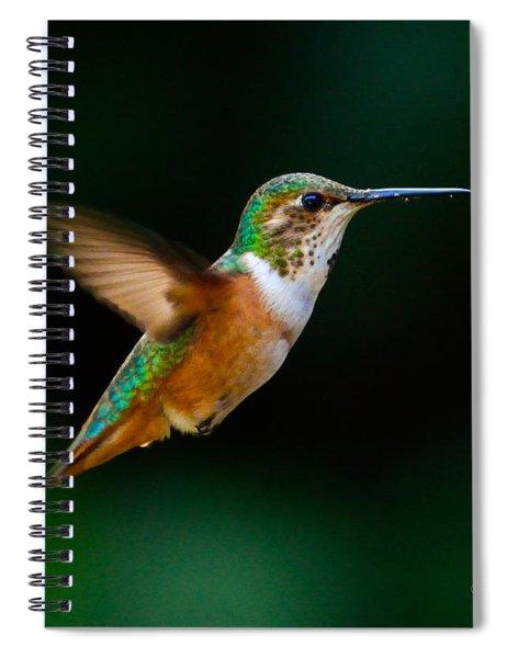 Hovering Allen's Hummingbird Spiral Notebook