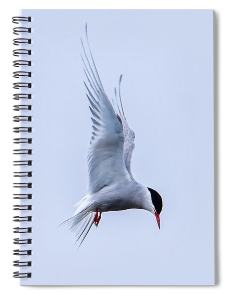 Hovering Arctic Tern Spiral Notebook