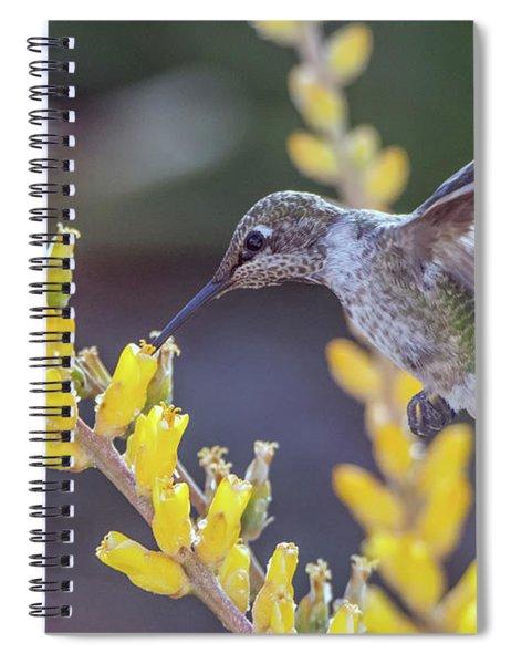 Hummingbird 6750-041818-1cr Spiral Notebook