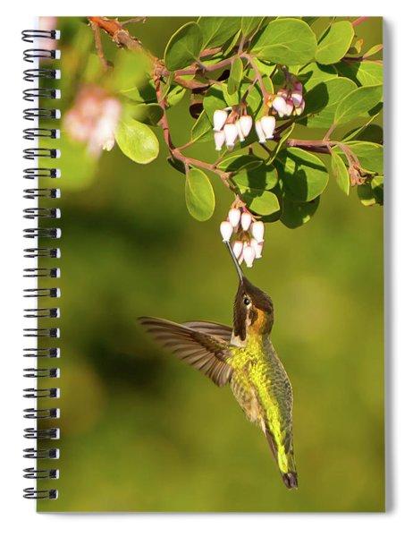 Hummingbird And Manzanita Blossom Spiral Notebook