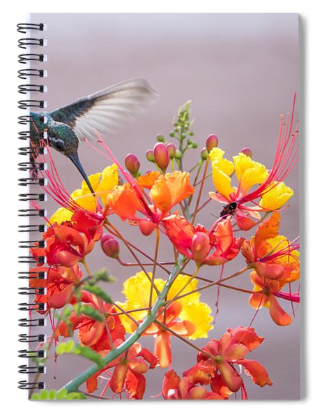 Hummingbird At Work Spiral Notebook