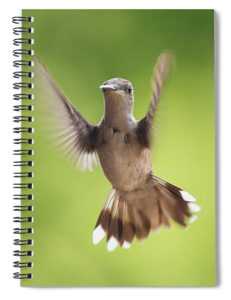 Hummingbird Hello There Spiral Notebook