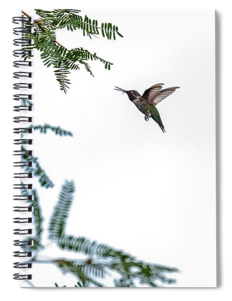 Hummingbird In Flight Isolated On White Sky Spiral Notebook