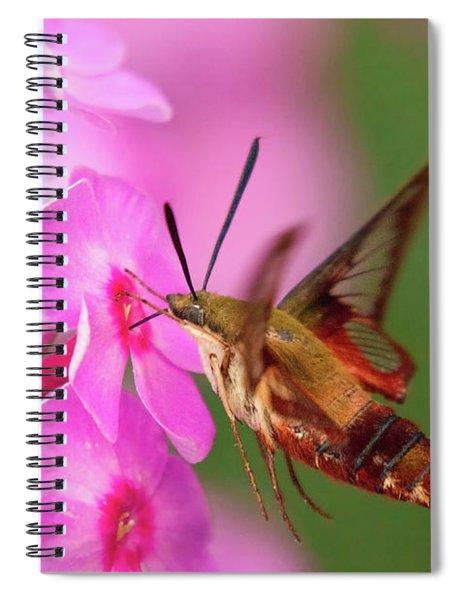 Hummingbird Moth Feeding 1 Spiral Notebook
