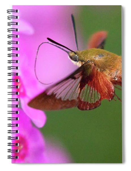Hummingbird Moth Feeding 2 Spiral Notebook