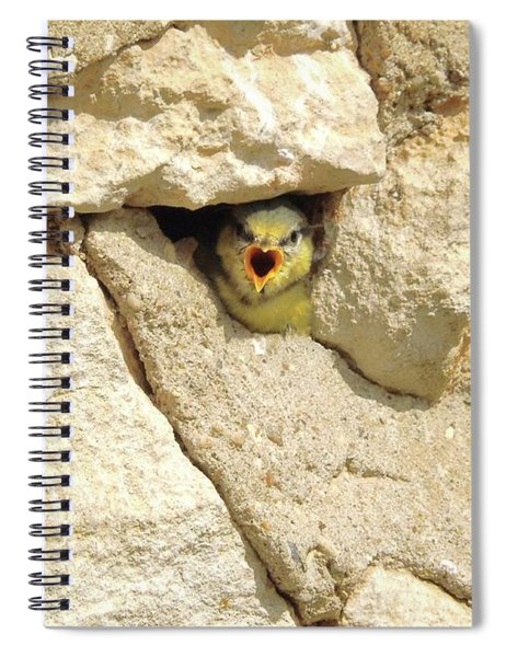 Hungry Chick Spiral Notebook