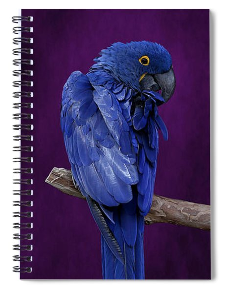 Hyacinth Macaw Panoramic Spiral Notebook