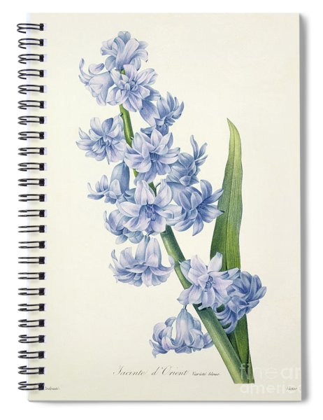 Hyacinth Spiral Notebook