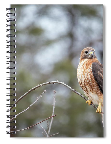 Hybrid Branch Spiral Notebook