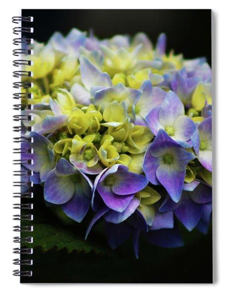 Hydrangea 3705 H_2 Spiral Notebook