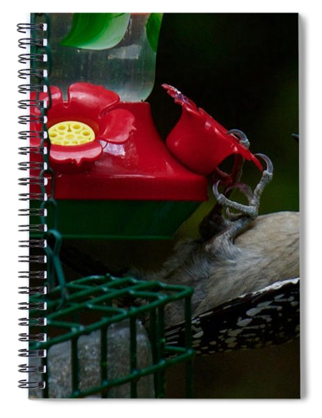 Spiral Notebook featuring the photograph I Want To Be A Hummingbird by Robert L Jackson