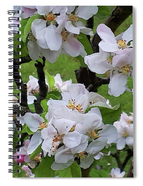 I Will Be With You In Apple Blossom Time Spiral Notebook