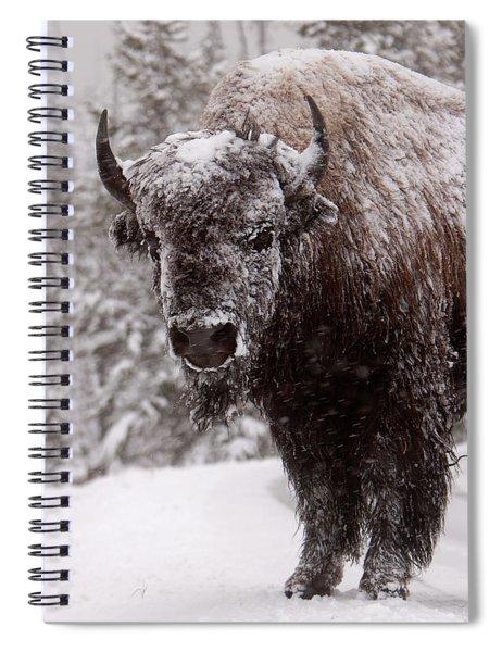 Ice Cold Winter Buffalo Spiral Notebook