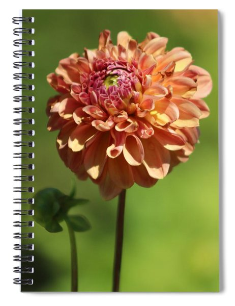 Iced Tea Dahlia In Marzipan And Milano Tones Spiral Notebook