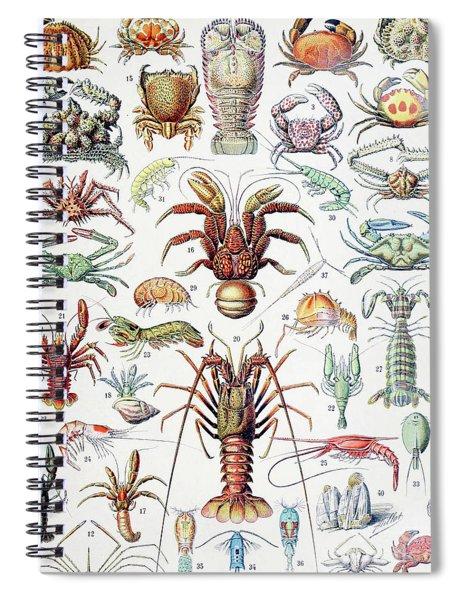 Illustration Of Crustaceans, 1923 Spiral Notebook