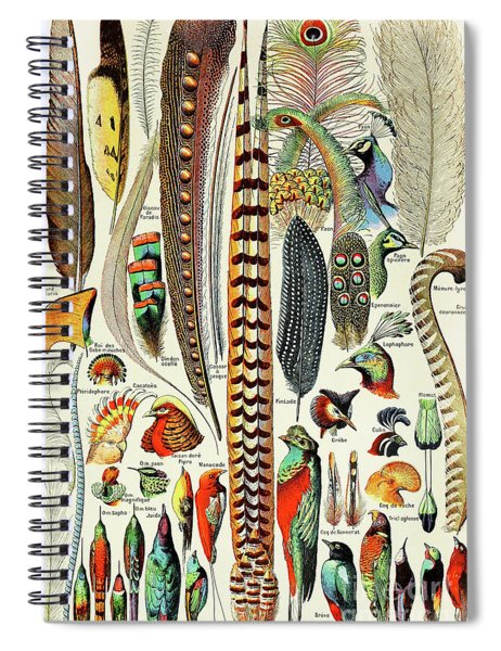 Illustration Of Feathers And Birds  Spiral Notebook