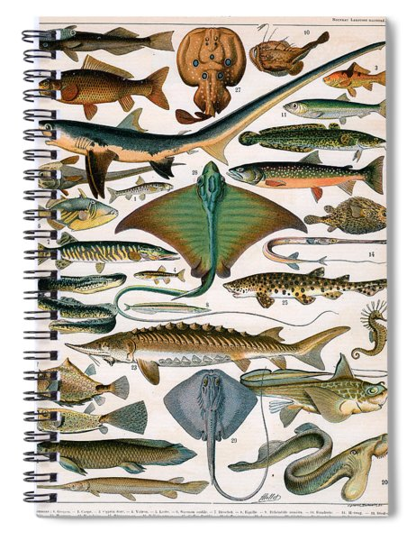 Illustration Of Ocean Fish Spiral Notebook