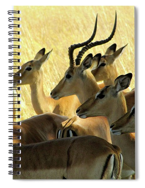 Impalas In The Plains Spiral Notebook