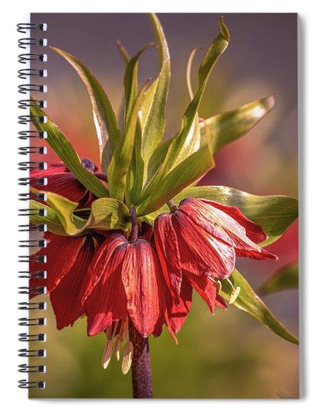 Imperial Crown #g3 Spiral Notebook