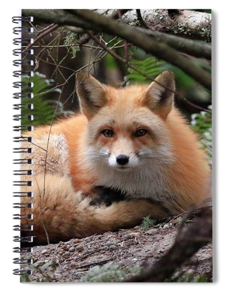 In Hiding Red Fox Spiral Notebook