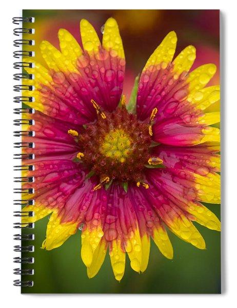Indian Blanket Spiral Notebook