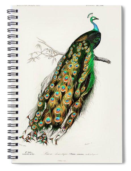 Indian Peafowl - Pavo Cristatus Spiral Notebook