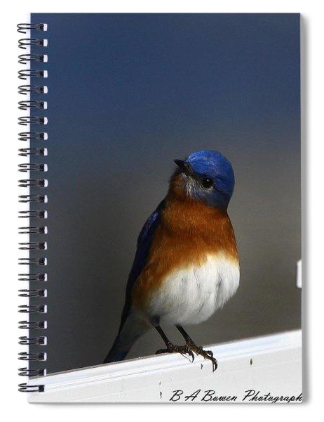 Inquisitive Bluebird Spiral Notebook
