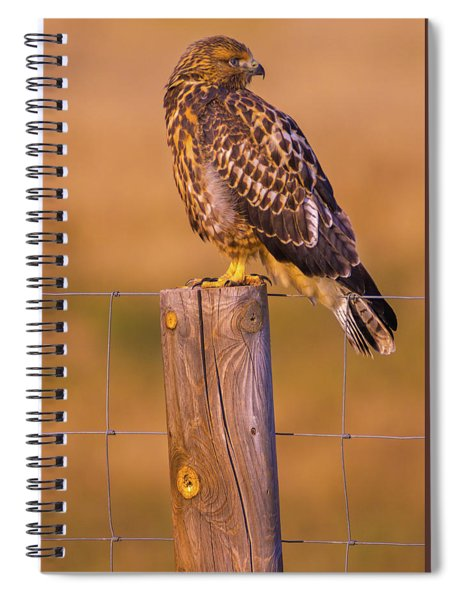 Spiral Notebook featuring the photograph Intermediate Morph Swainson's Hawk by John De Bord