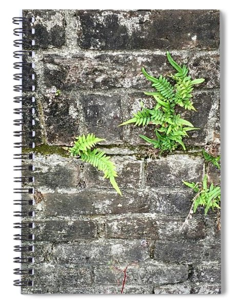 Intrepid Ferns Spiral Notebook
