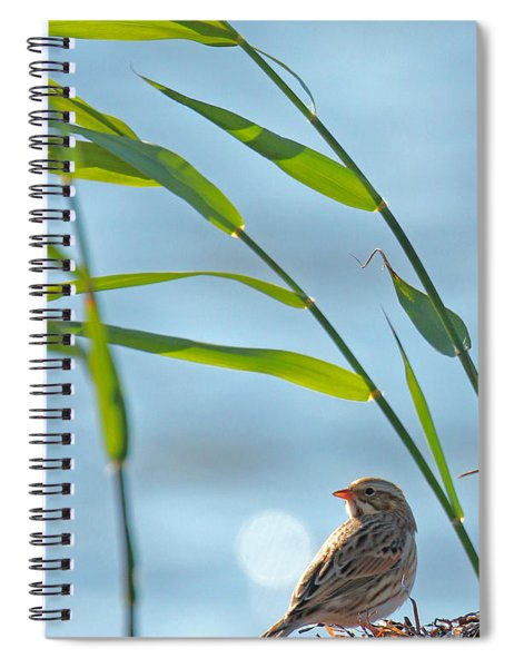 Ipswich Sparrow Spiral Notebook