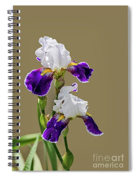 Iris Germanica In Purple And White Spiral Notebook