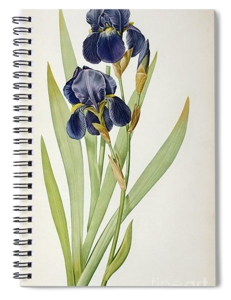 Iris Germanica Spiral Notebook