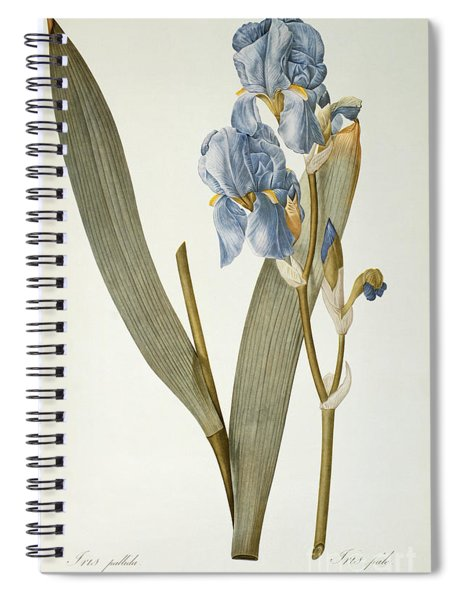 Iris Pallida Spiral Notebook