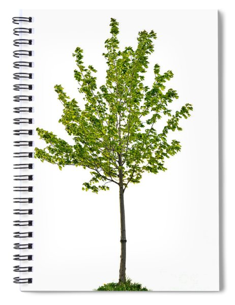 Isolated Young Maple Tree Spiral Notebook