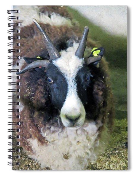 Jacob Sheep Spiral Notebook