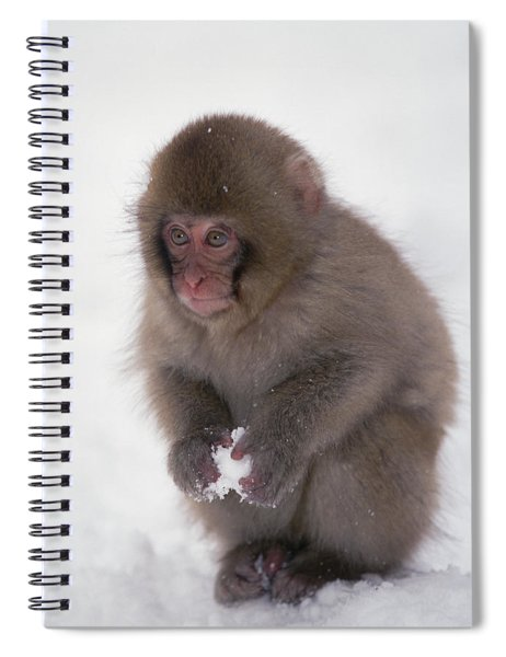 Japanese Macaque Macaca Fuscata Baby Spiral Notebook