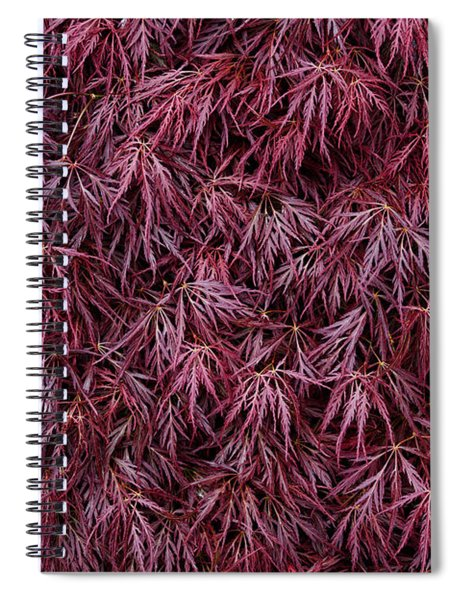 Japanese Maple Garnet Spiral Notebook