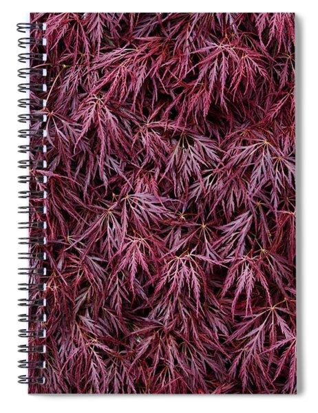 Japanese Maple Garnet Spiral Notebook