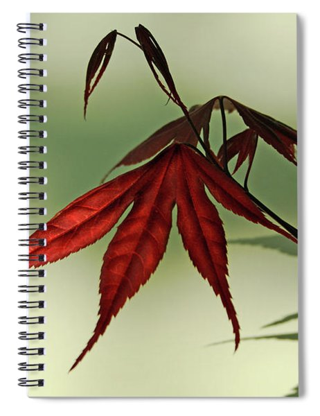 Japanese Maple Leaf Spiral Notebook