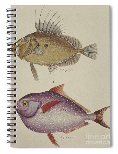 John Dory And Opah Spiral Notebook
