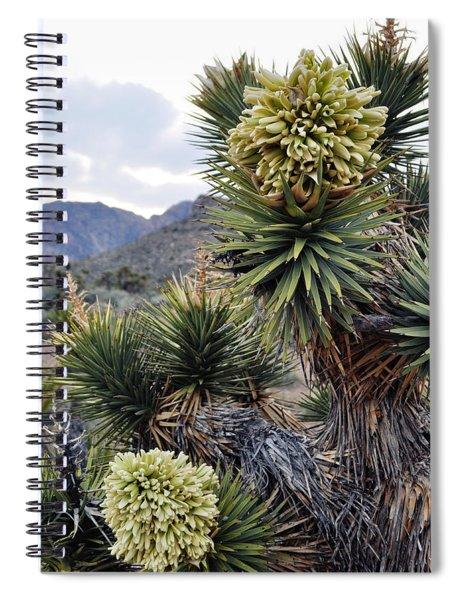 Joshua Tree Bloom Rainbow Mountain Spiral Notebook
