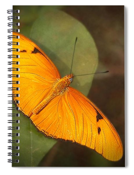 Julia Dryas Butterfly-2 Spiral Notebook