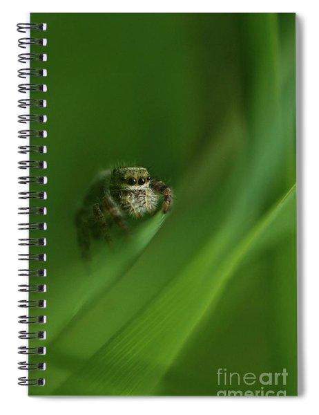 Jumping Spider Contemplating Life Spiral Notebook