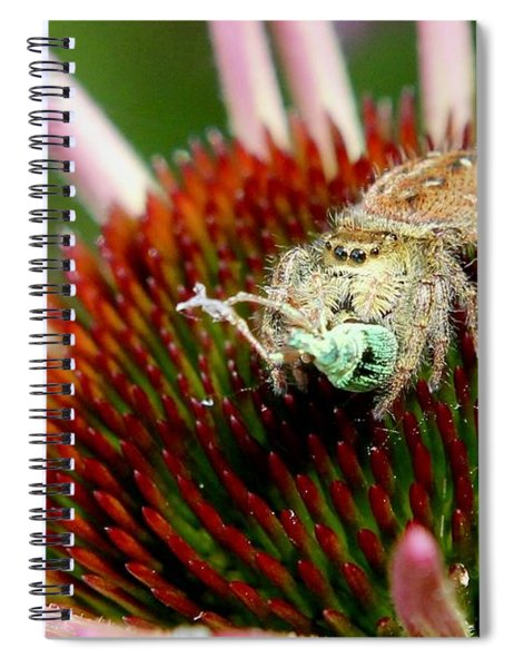 Jumping Spider With Green Weevil Snack Spiral Notebook