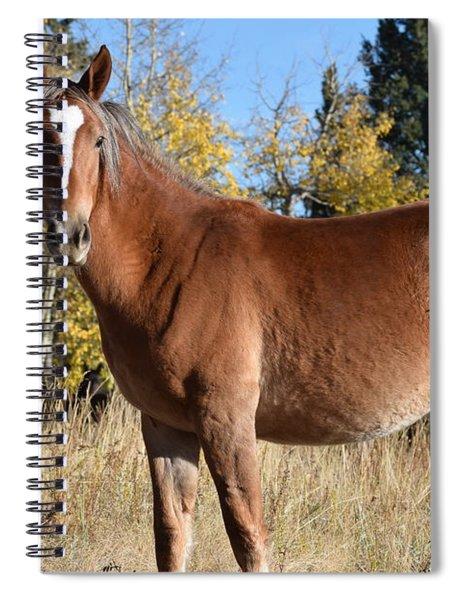 Horse Cr 511 Divide Co Spiral Notebook